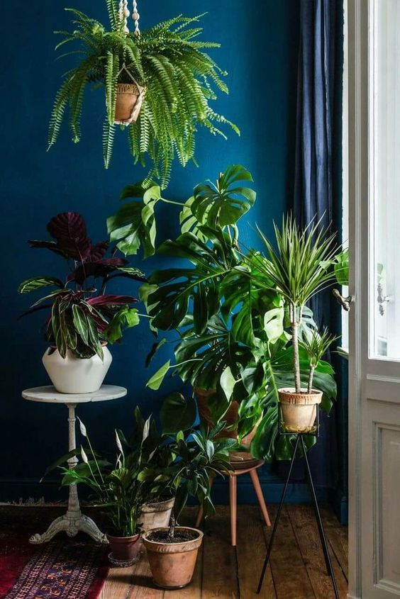 Hanging plants indoors
