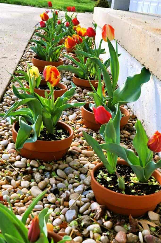 Create a Border of Potted Plants