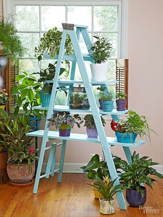 Use Cross Boards to Display Plants