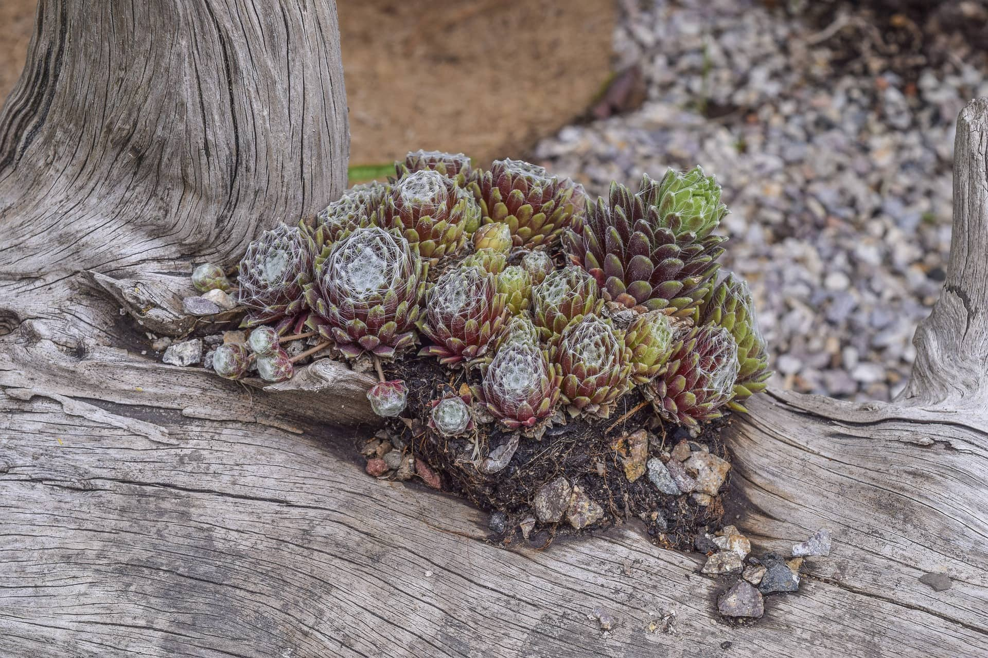 <strong>Create a Log Succulent Planter</strong>